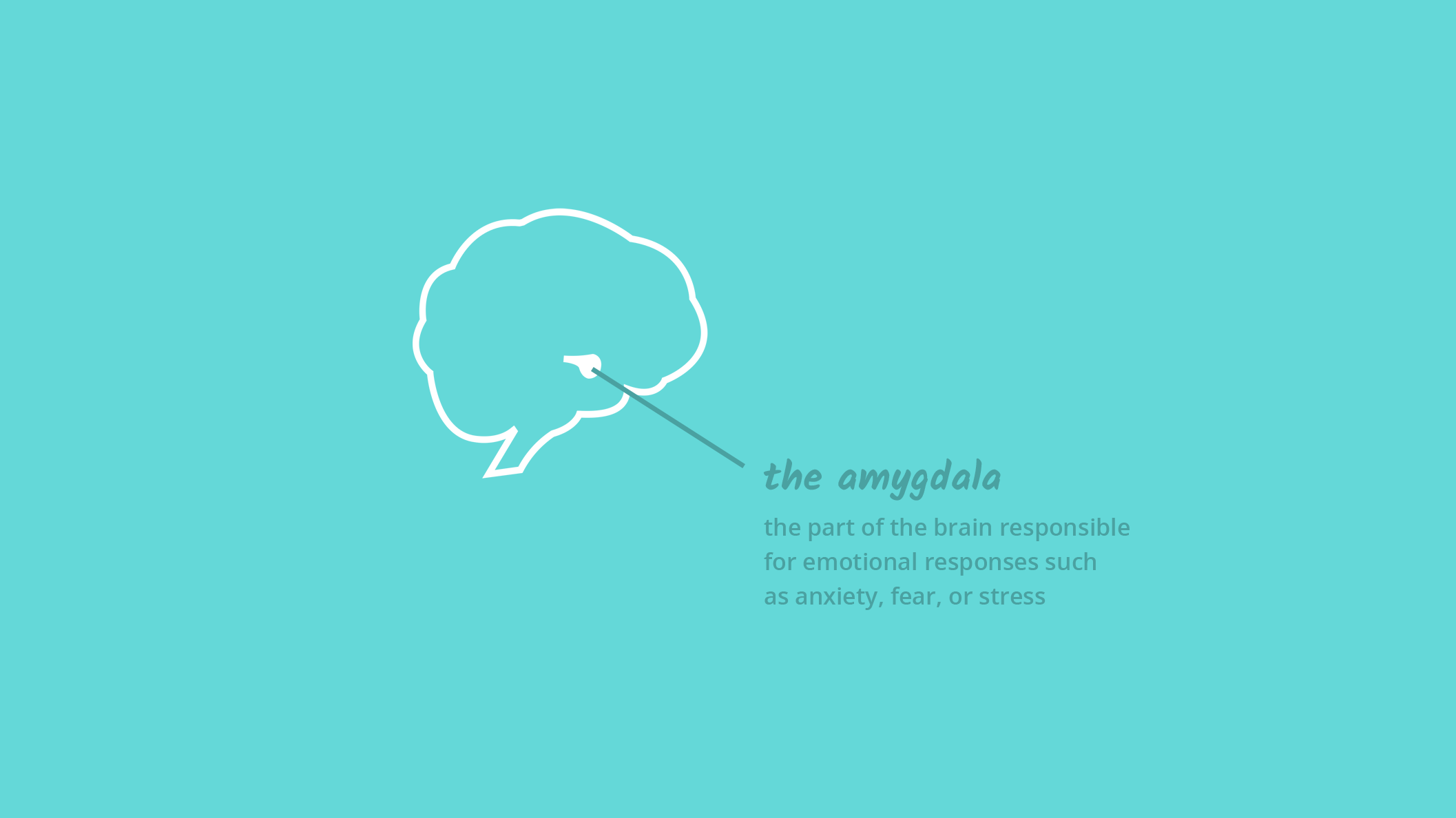 Amgydala, the part of the brain that is responsible for our emotional responses such as fear, anxiety, and stress